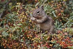 Squirrel in Heaven Stock Photo