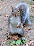 Squirrel : ` Hello do you have nuts ? ` stock images