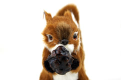 Squirrel with his nut. Royalty Free Stock Image