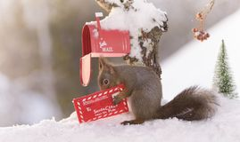 Squirrel holding a christmas santa letter. Red squirrel is holding a christmas santa letter Royalty Free Stock Images