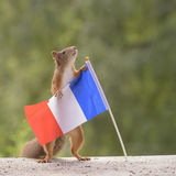 Squirrel is holding a France Flag Stock Image