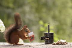 Squirrel holding matches and Matchbox Royalty Free Stock Image