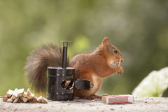 Squirrel holding matches Stock Photography