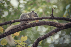 Squirrel holding onto a tree branch Stock Photo