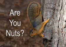 Squirrel upside down on tree trunk with Are You Nuts text Royalty Free Stock Photo