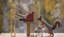 Squirrel holding shopping cart and skeleton with cash register Stock Photo