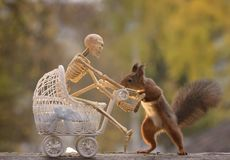 Squirrel holding a stroller with a skeleton Royalty Free Stock Images