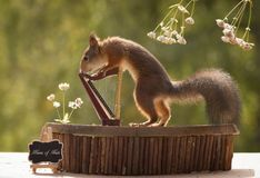 Squirrel holding  on to a harp Stock Images