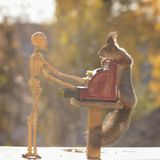 Squirrel holds cash register with a skeleton Royalty Free Stock Photography