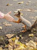 Squirrel holds the paws of a child`s hand.