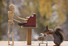 Squirrel holds a shopping cart and skeleton with cash register Stock Photos