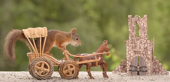 Squirrel in a horse carriage Stock Photography
