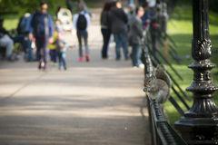 Squirrel in Hyde Park in London, UK Stock Image