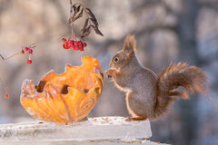 Squirrel ice stand Stock Images