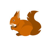 Squirrel. Illustration of squirrel on white background Royalty Free Stock Photography