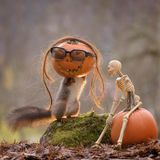 Squirrel inside a pumpkin with skeleton Stock Images
