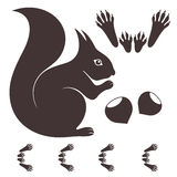 Squirrel. Isolated objects on white background. Vector illustration (EPS 10 Royalty Free Stock Image