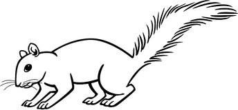 Squirrel. Line drawing of a squirrel, standing Royalty Free Stock Image