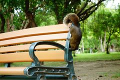 Squirrel. The little squirrel on the chair stunts, want to get a cookie from my hand Stock Photo