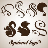 Squirrel logo set. This pack includes 7 squirrel logo concepts designed in a simple way so it can be use for multiple proposes like logo ,marks ,symbols or icons Royalty Free Stock Photos