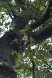 Squirrel on a tree. Squirrel looking down the tree stock image