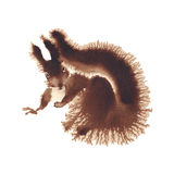 Squirrel looking isolated watercolor. Squirrel isolated on a white background, watercolor Royalty Free Stock Photo