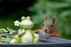 Squirrel, Mammal, Fauna, Rodent Stock Photos