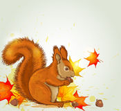 Squirrel and maple leaves Stock Photos