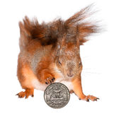 Squirrel and money Stock Image