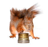 Squirrel and money Royalty Free Stock Image