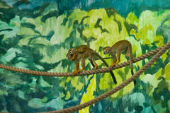 Squirrel monkey family Royalty Free Stock Images