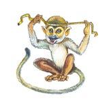 Squirrel monkeys, Saimiri, Death's head.. Squirrel monkeys, Saimiri. Hand darawing watercolor Royalty Free Stock Image