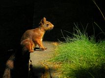 Squirrel surrounded by nature. illuminated by direct sunlight royalty free stock photography
