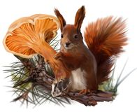 Squirrel and a mushroom chanterelle Stock Photography