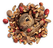 Squirrel Nut Burst Royalty Free Stock Image