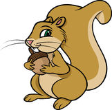 Squirrel nut Stock Images