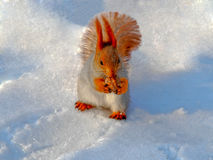 Squirrel in the snow Royalty Free Stock Photography