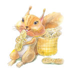 Squirrel with nuts of peanut. Watercolor illustration Stock Photography