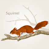 Squirrel on an old tree vector Royalty Free Stock Photo