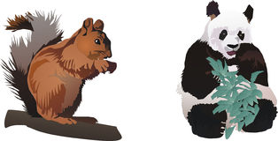 Squirrel and panda Stock Photography