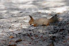 Squirrel paradise. Stock Image