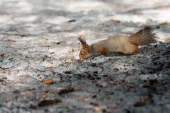 Squirrel paradise. Royalty Free Stock Photos