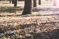 Squirrel in a park amongst the trees posing for a photographer. Stock Photos