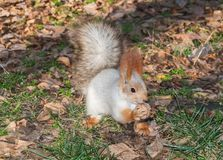 A squirrel in a park Stock Photo