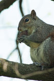 Squirrel in the park with tree. In spring Stock Photo