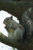 Squirrel in the park with tree. In spring Stock Photography