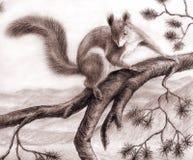 Squirrel 1 Stock Images