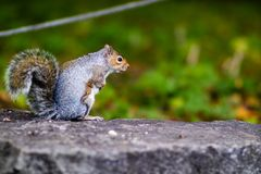 Squirrel perched on a rock Stock Photo