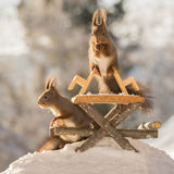 Squirrel picnic Stock Photography