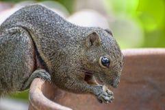 Squirrel Portrait Stock Photo